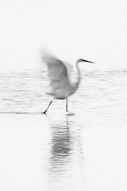 DavidCrookes-WildLife-Bird-12-0348
