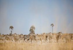 DavidCrookes-JacksCamp-Botswana-12-0576.