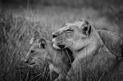 DavidCrookes-CrookesAndJackson-Wilderness-Wildlife-18-9404