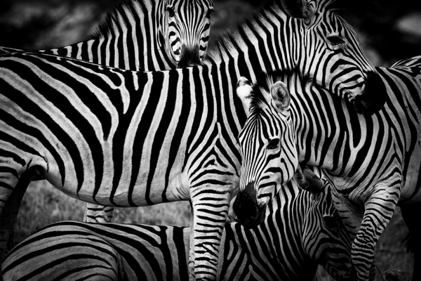 DavidCrookes-CrookesAndJackson-Wilderness-Wildlife-18-0138