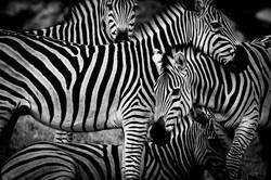 DavidCrookes-CrookesAndJackson-Wilderness-Wildlife-18-0138