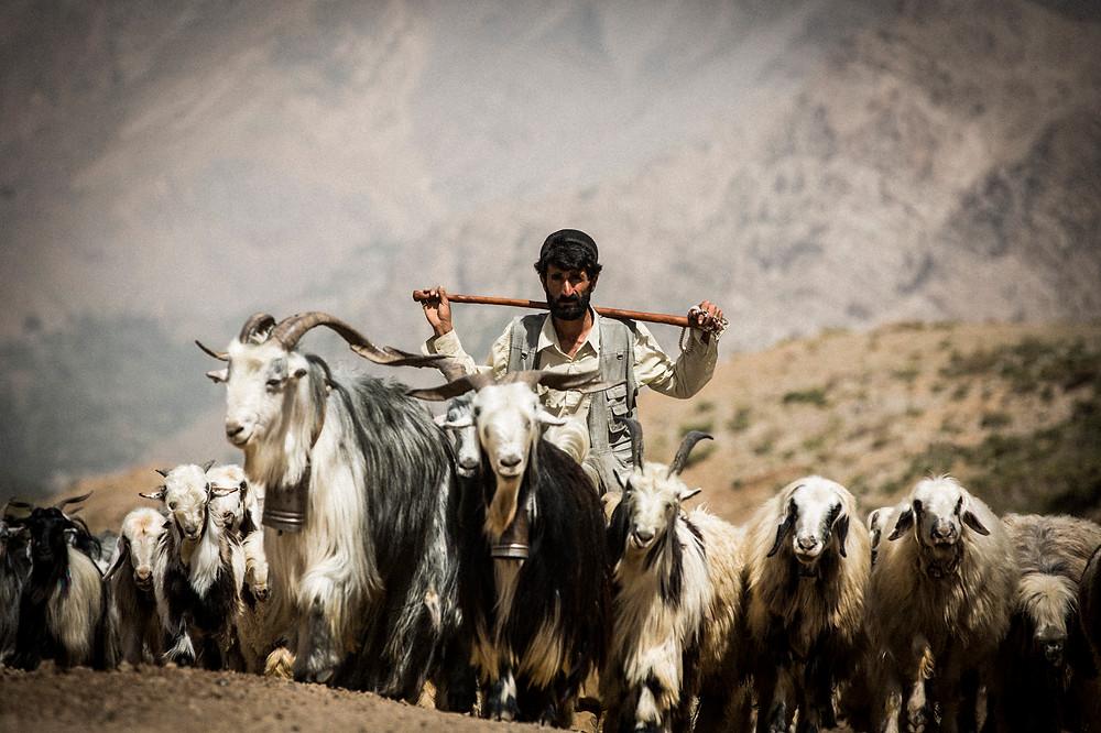 David Crookes   Bakhtiari   Nomadic   Iran   Goats
