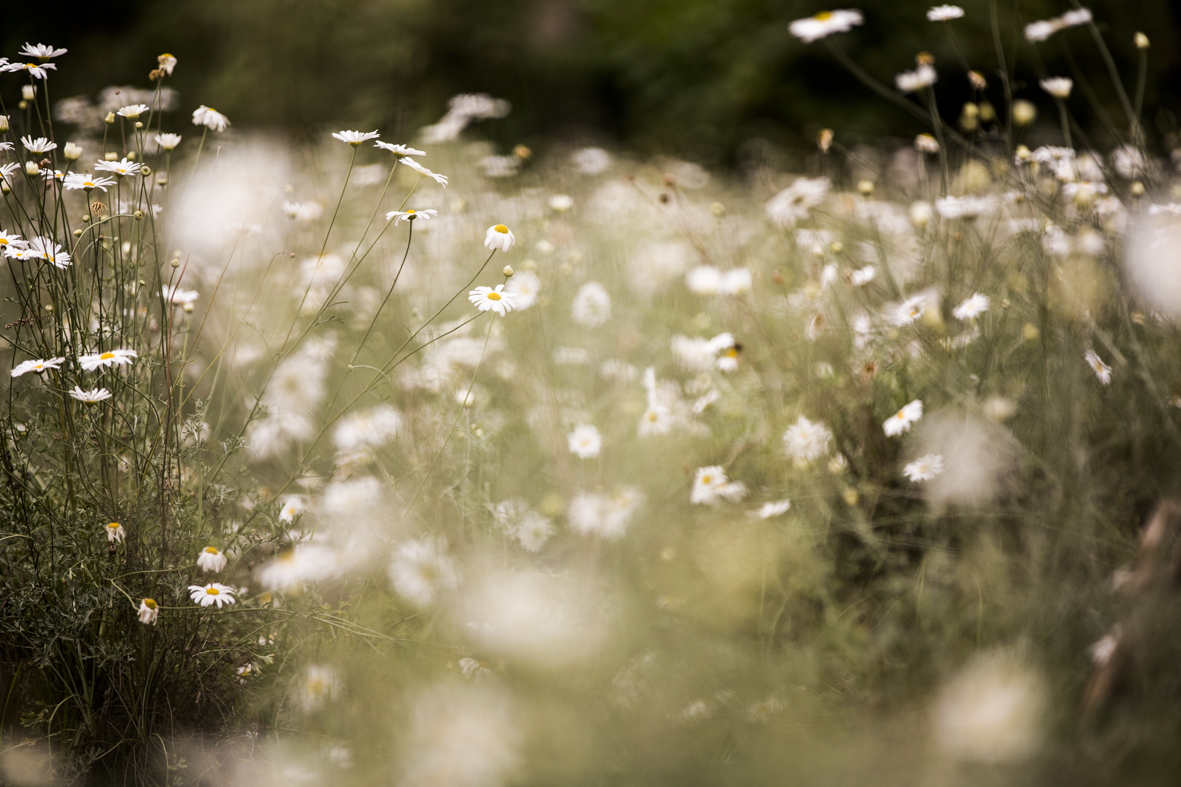 Bisate-Wilderness-CrookesandJackson-17-0049