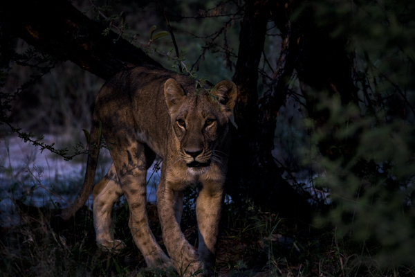 DavidCrookes-CrookesAndJackson-Wilderness-Wildlife-18-6962