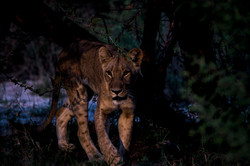 DavidCrookes-CrookesAndJackson-Wilderness-Wildlife-18-6962