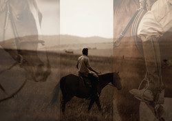 ARIJIJU-HORSES-IMAGE