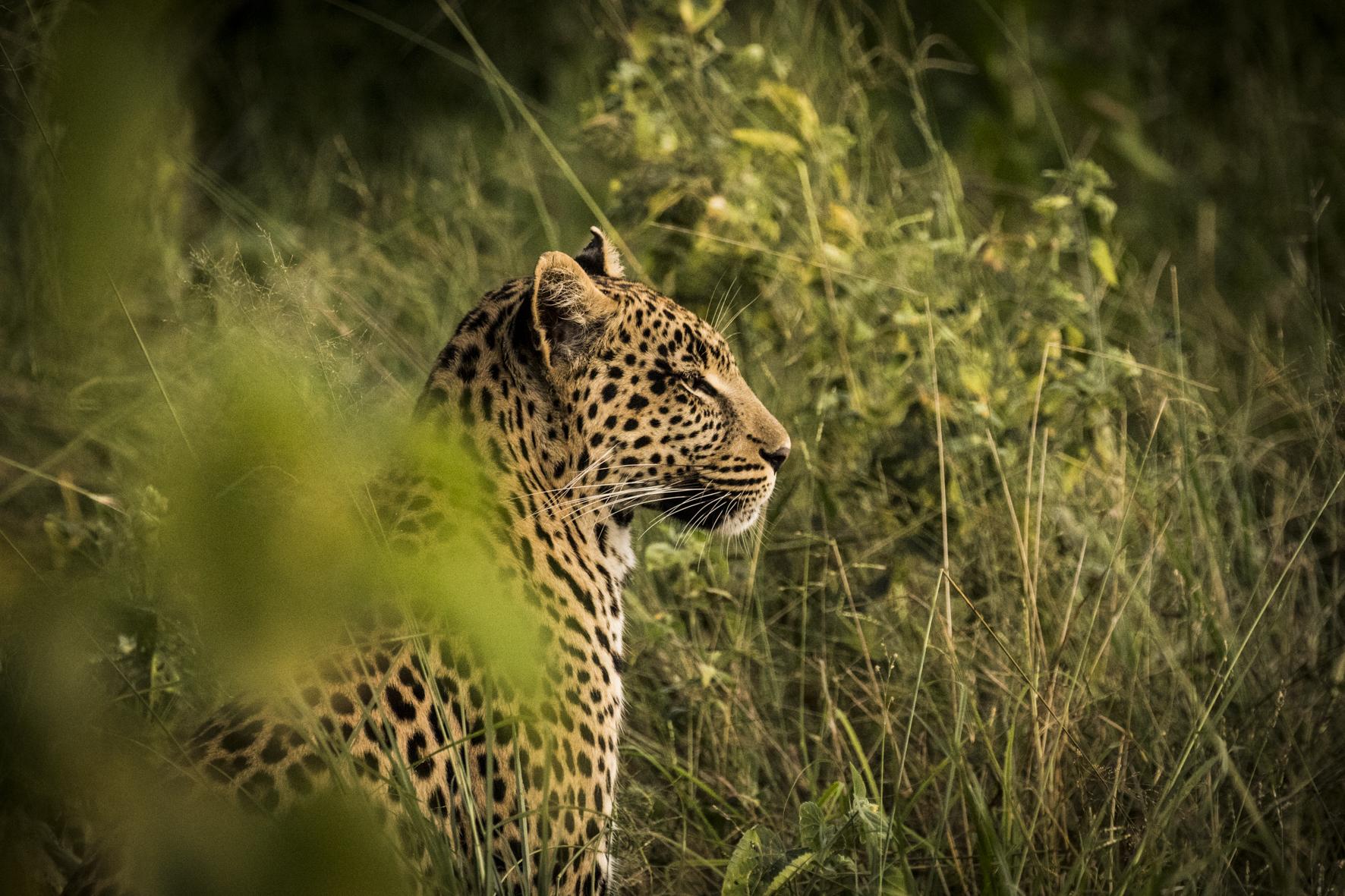 AbuCamp-Botswana-CrookesAndJackson-6059