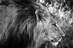 CrookesAndJackson-Segera-Laikipia-Kenya-19-4651