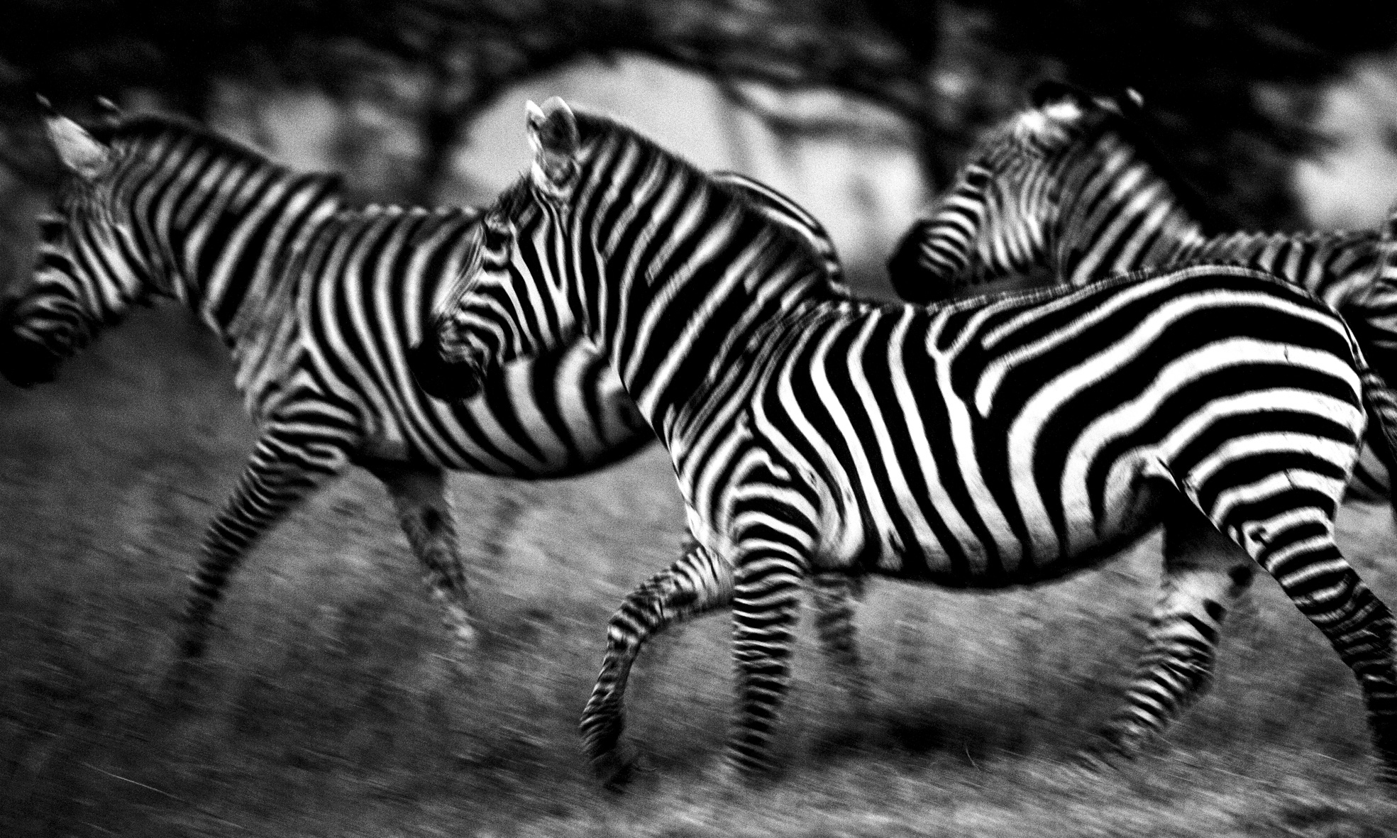 David Crookes | Wildlife