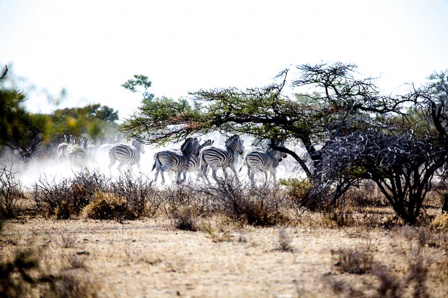 David Crookes-Botswana-13-1459