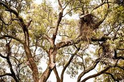 DavidCrookes-WildLife-Botswana-12-2-4