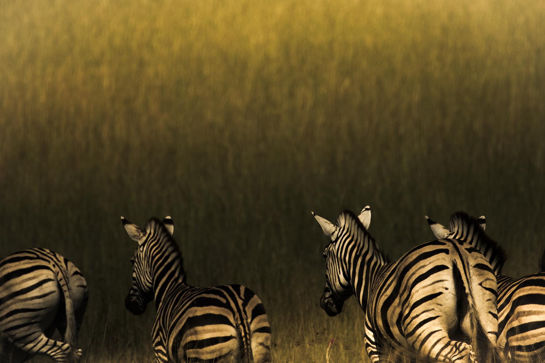 AbuCamp-Botswana-CrookesAndJackson-5609.