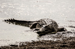 DavidCrookes-CrookesAndJackson-Wilderness-Wildlife-18-0719