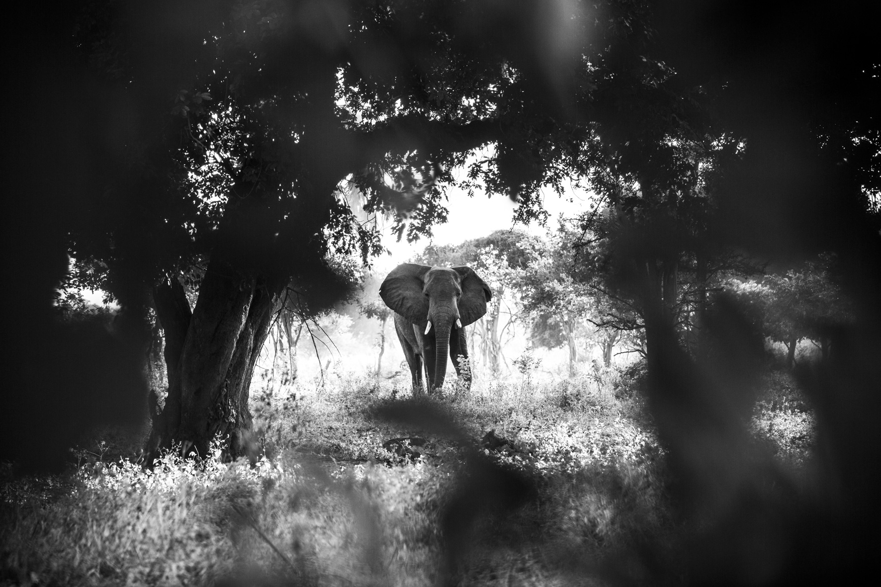 David Crookes | WildLife | Elephant