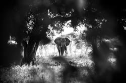 DavidCrookes-Elephant-6042