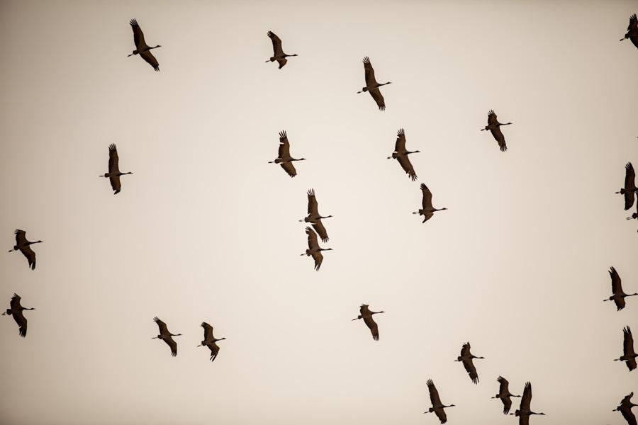 DavidCrookes-WildLifePhotography-Jaisalmer-13-4844