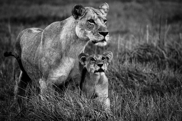 DavidCrookes-CrookesAndJackson-Wilderness-Wildlife-18-9380