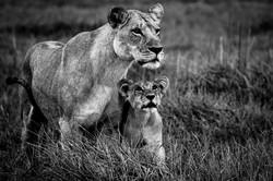 DavidCrookes-CrookesAndJackson-Wilderness-Wildlife-18-9380