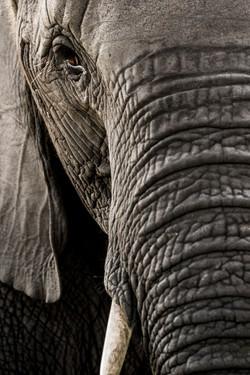 AbuCamp-Botswana-CrookesAndJackson-5861
