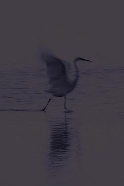 DavidCrookes-WildLife-Bird-12-0348_edited