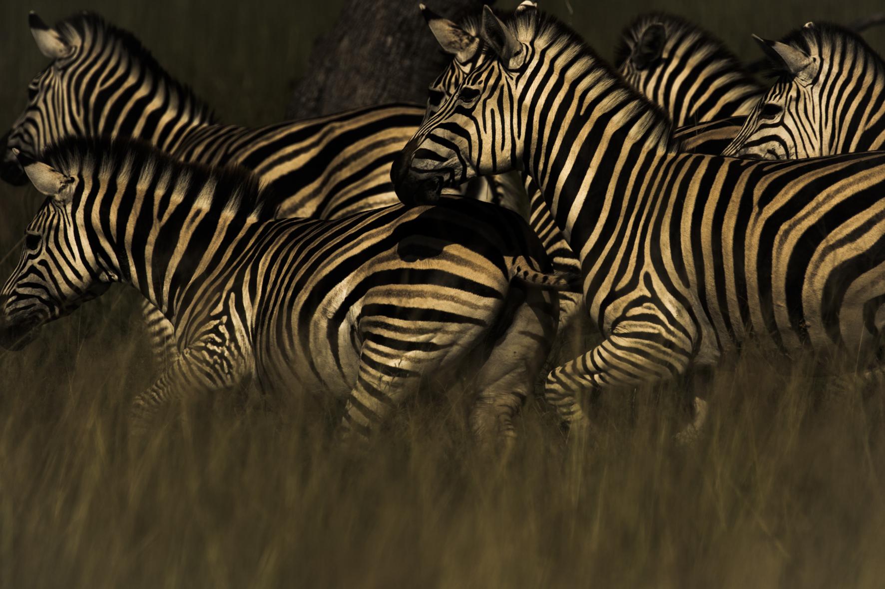 AbuCamp-Botswana-CrookesAndJackson-5603