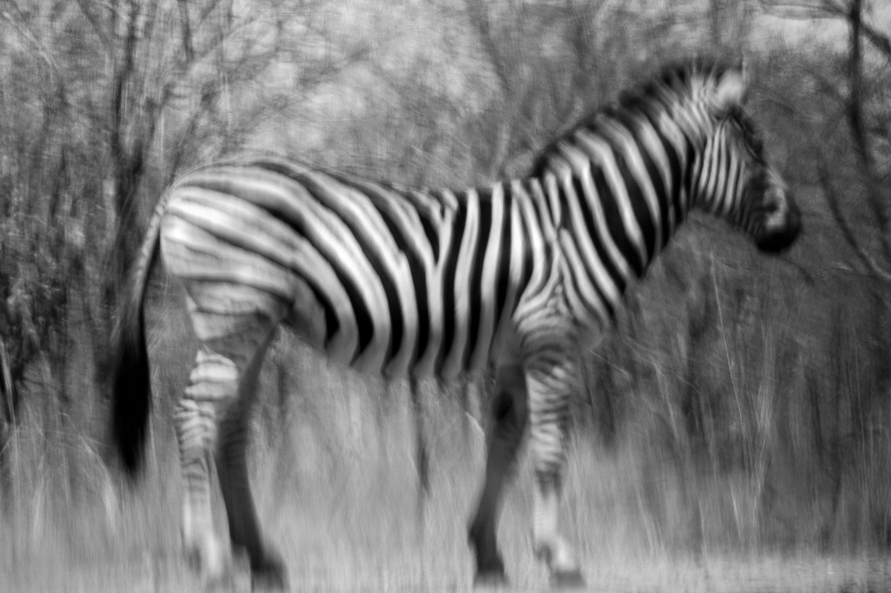 DavidCrookes| Wildlife