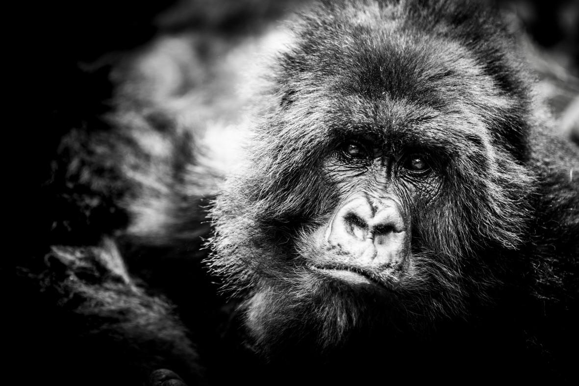 The SilverBack | Rwanda