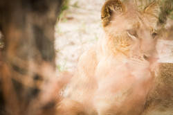 DavidCrookes-CrookesAndJackson-Wilderness-Wildlife-18-6527
