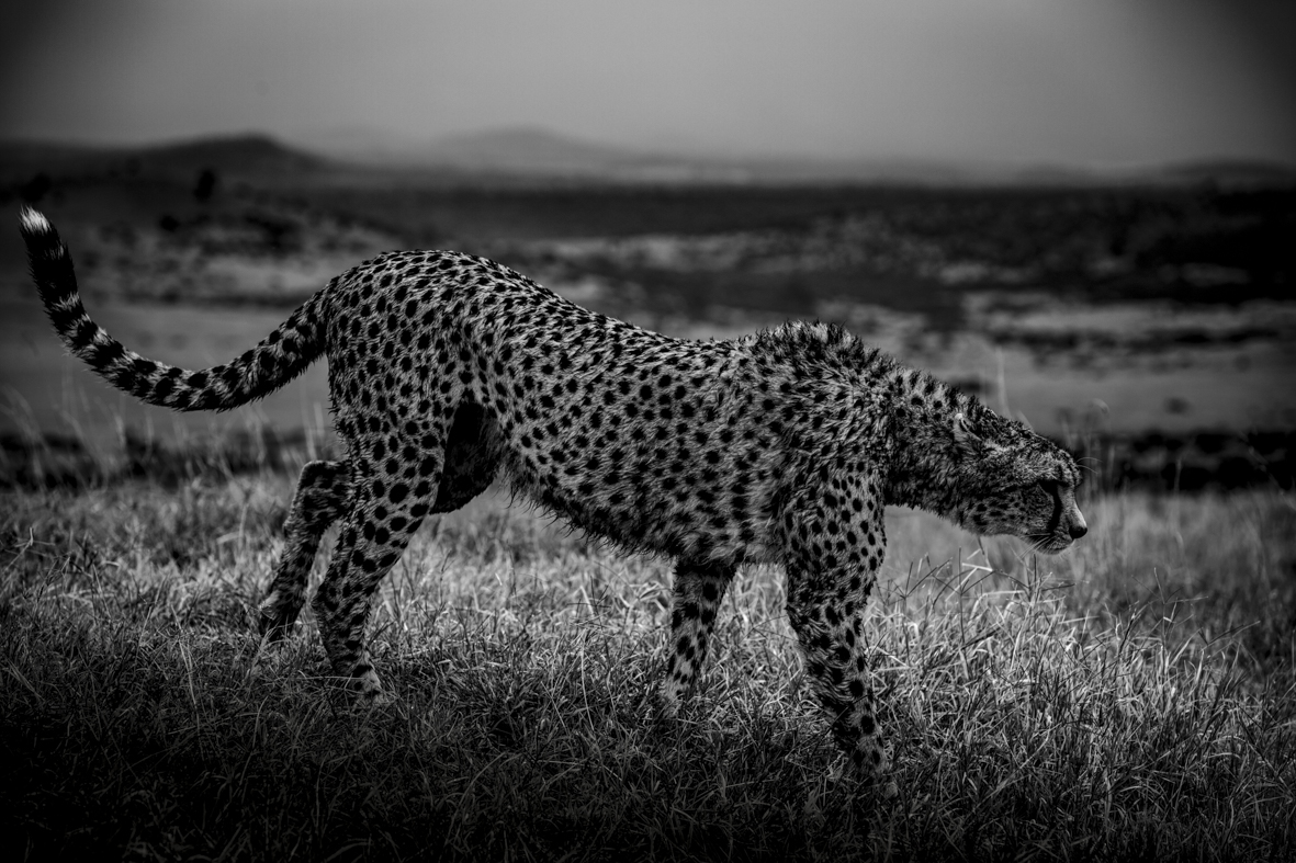 David Crookes | Wildlife