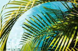 CrookesAndJackson-DavidCrookes-Caribbean