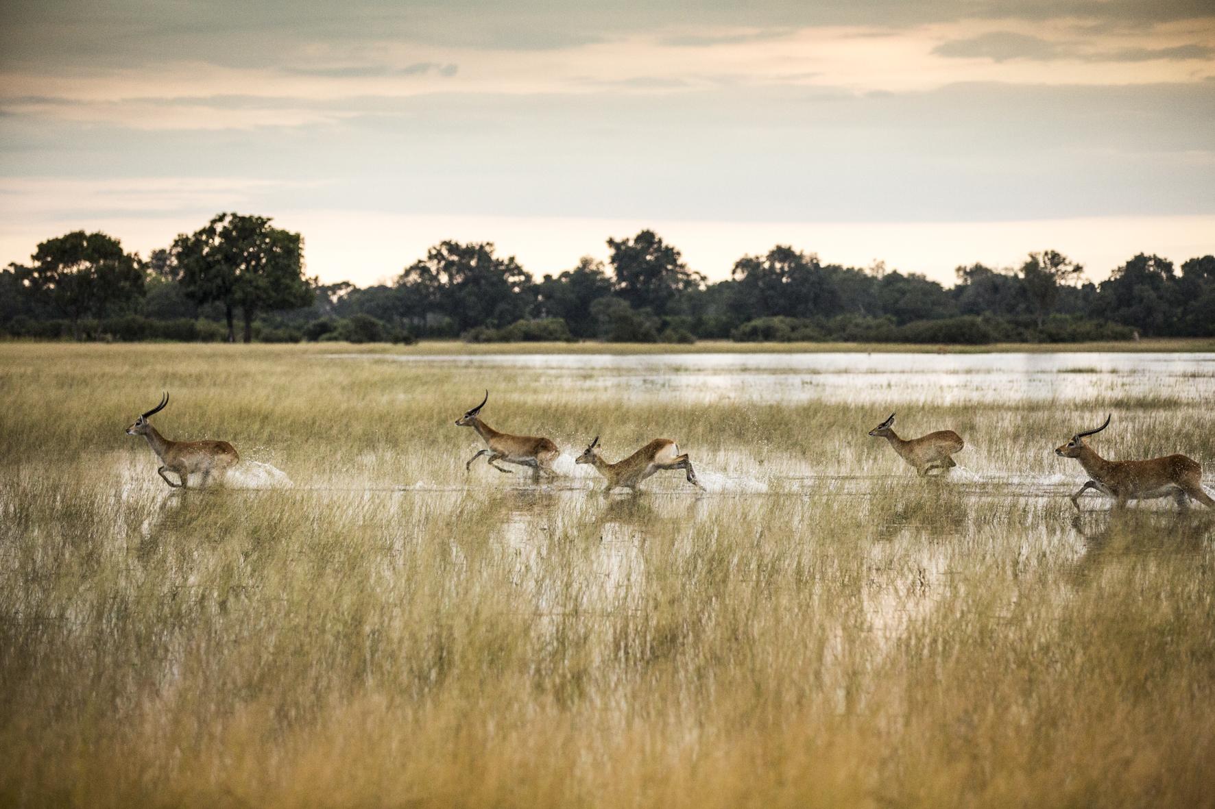 VumburaCamp-Botswana-CrookesAndJackson-7140