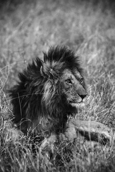 David Crookes | Kenya | Masai Mara