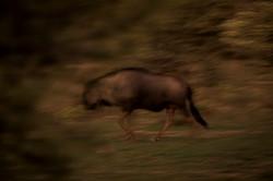 More-Marataba-Trails-CrookesAndJackson-5