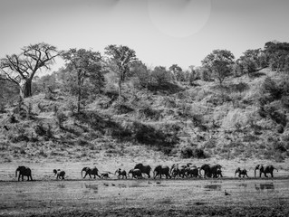 David Crookes | Notes From The Field | Tracking the wildlife of Zimbabwe