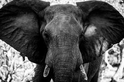DavidCrookes-Elephant-6829