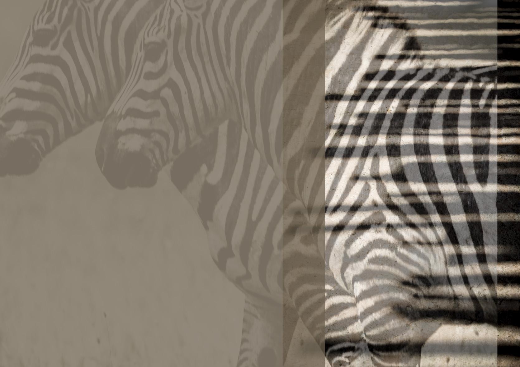 Arijiju-ZebraDesign
