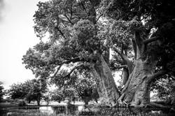 CrookesAndJackson-CampKalahari-UnchartedAfrica-19-7962