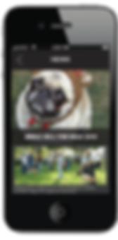 m8_dog park app-02.png