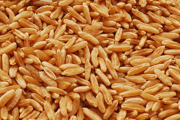 Speise Kamut (Khorasan Weizen) 1kg