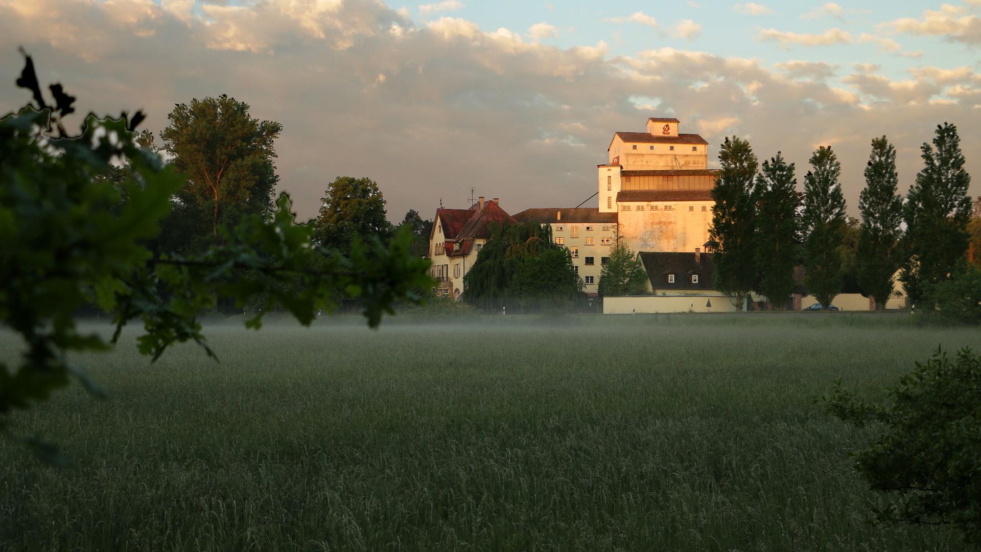 Mühle_Morgentau_01.jpg