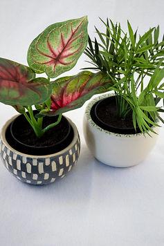 planters2020-0932.jpg
