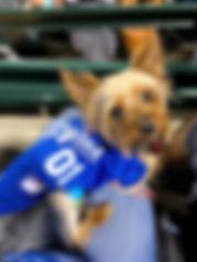 Jax Govekar Yorkie mascot of Celebration Midwest Entertainment