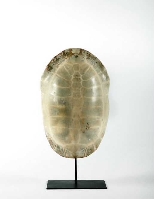 LAND TURTLE ON METAL STAND