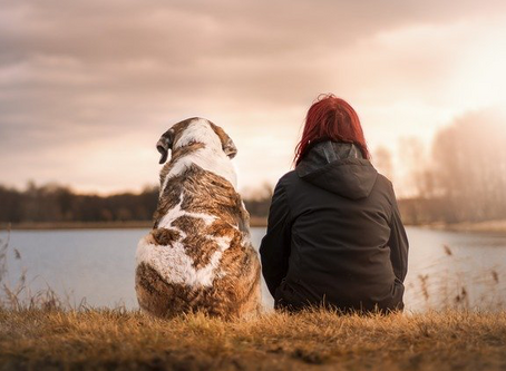 2 unique tips to make selling a home with pets easier for you and your furry friends