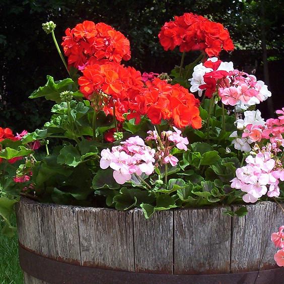 Geranium & Garden Day 2