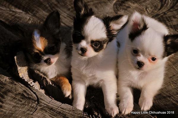 kenna pups.jpg