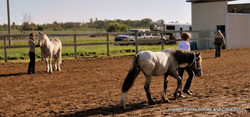 horses showing