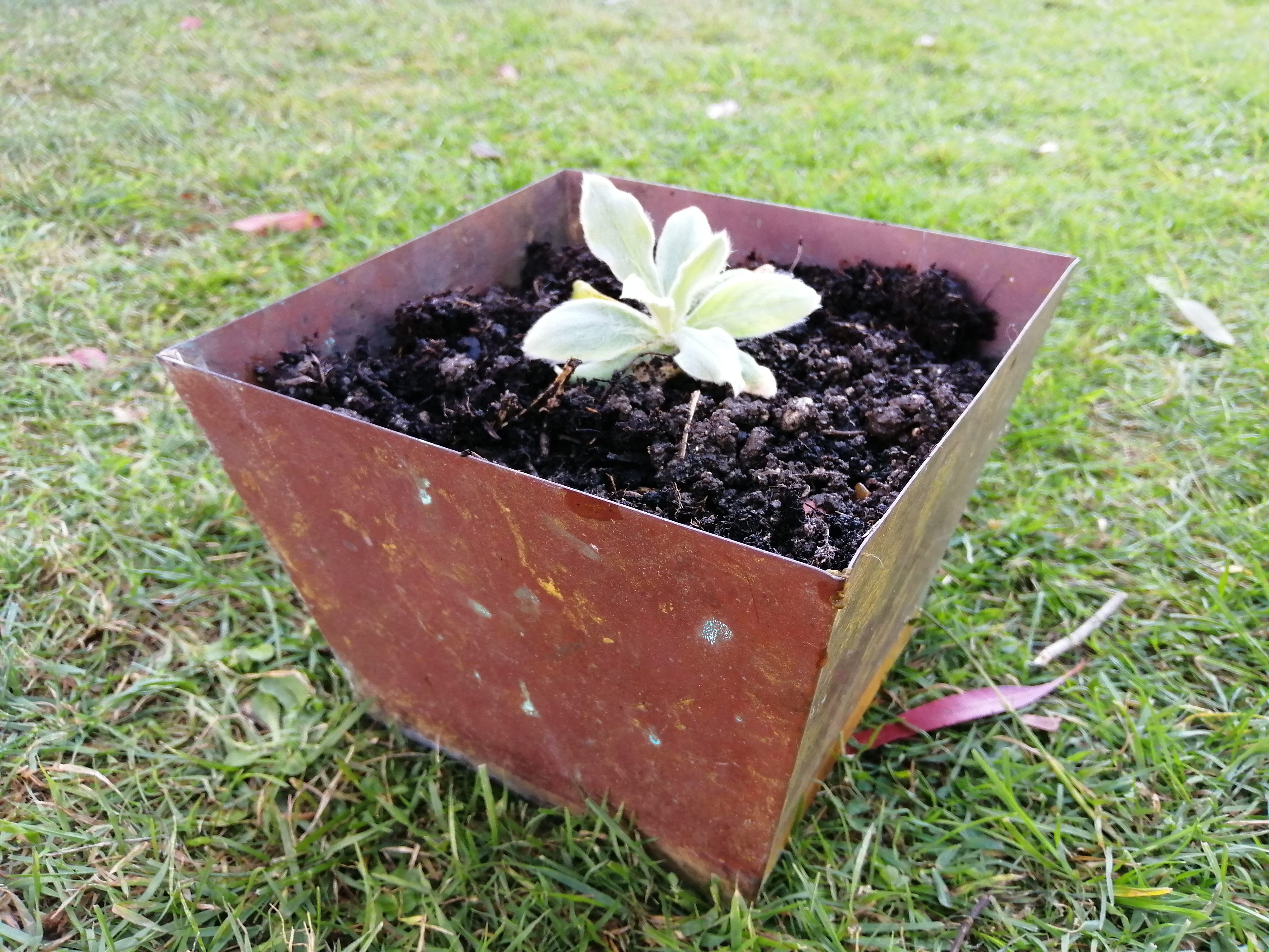 Square copper planter
