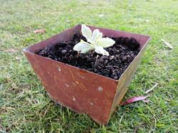 Square copper planter