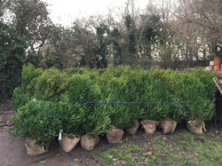 garden-planting-consultant-london-south-